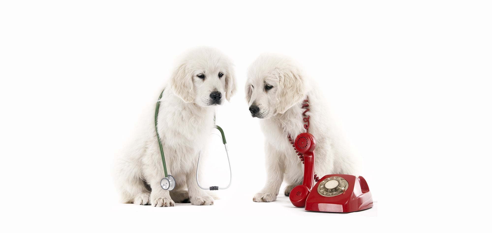contact us   meridian veterinary clinic